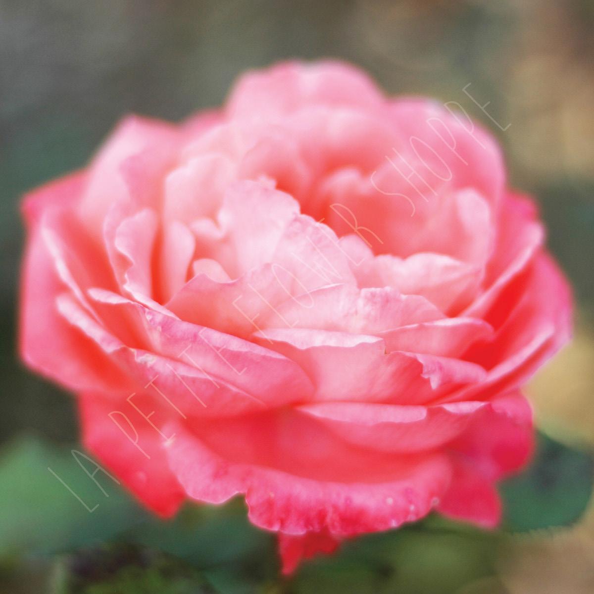 La Petite Flower Shoppe - Fine Art Flower Photography Prints